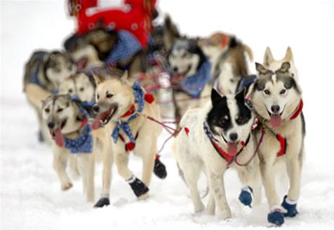Iditarod sled race