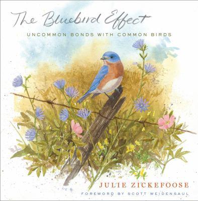 bluebird effect