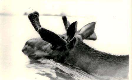 2268 - Moose